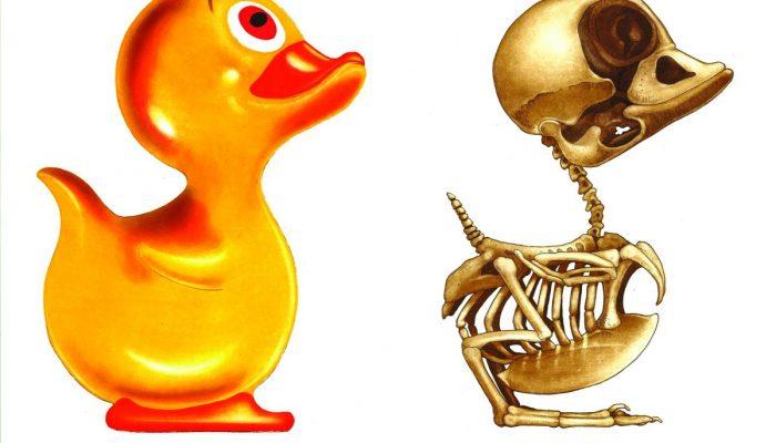 John Kindness duck-2